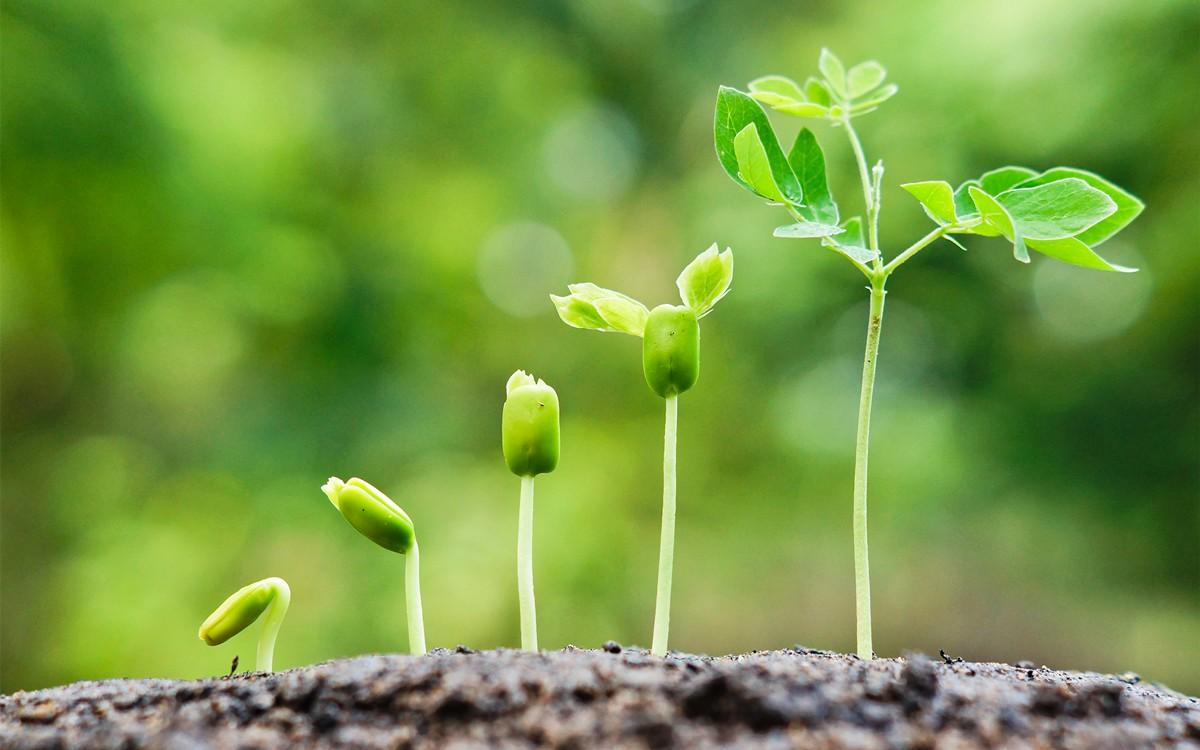 Triebe wachsen aus der Erde